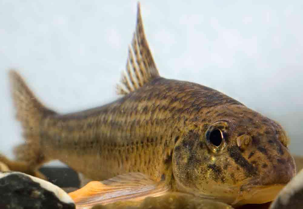 на что клюет налим в реальной рыбалке