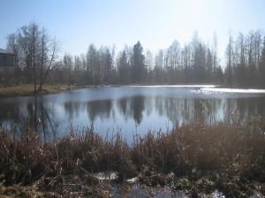 пруд, конец марта