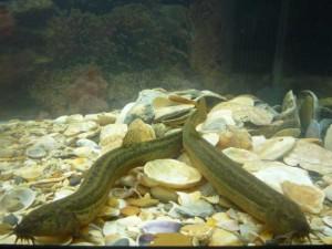вюны в аквариуме