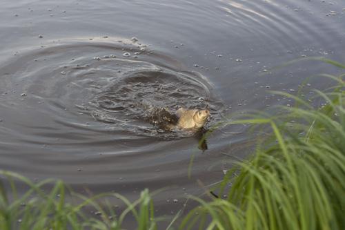 карась ловля какая температура воды